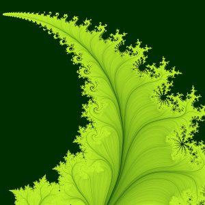 fern-fractal-maade-tuule